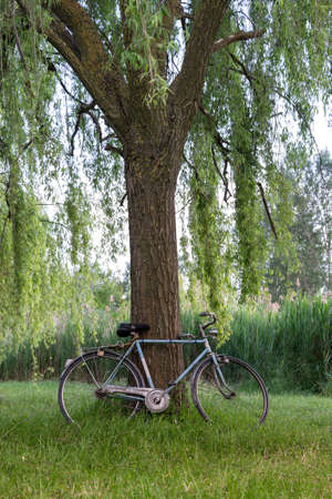 Bicycle under a tree in an italian garden photo