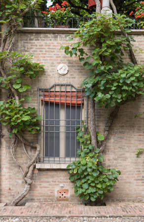 An old house with cilmbing plants in a garden in Ferrara Italy Stock Photo