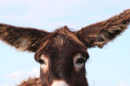 furry donkey Stock Photo