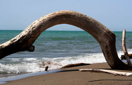curved treetrunk at abandoned beach