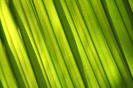 sunlighted palmtree leaves Stock Photo