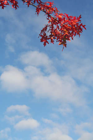 coloures of the indian summer