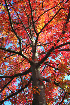coloures of fall