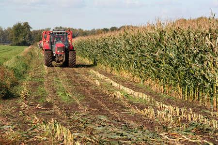 harvesting maize Stock Photo