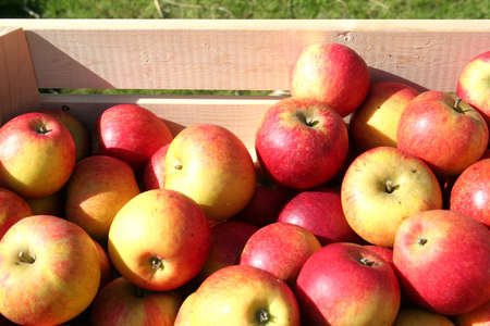 collected apples  Stock Photo
