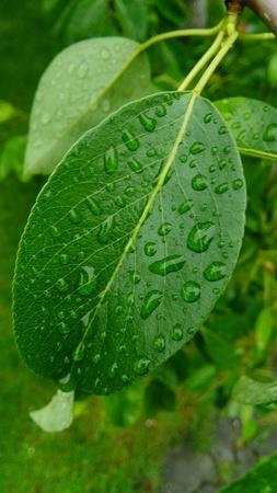 dew: Dew on leaf