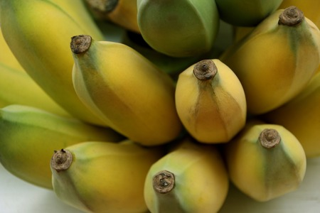 close up of Cultivated bananas or Thai bananas photo