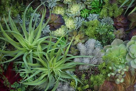 Miniature succulent plants, garden in tray, fullframe