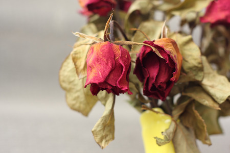 wither: wither rose, died rose