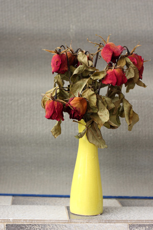 wither: wither rose, died rose in vase Stock Photo