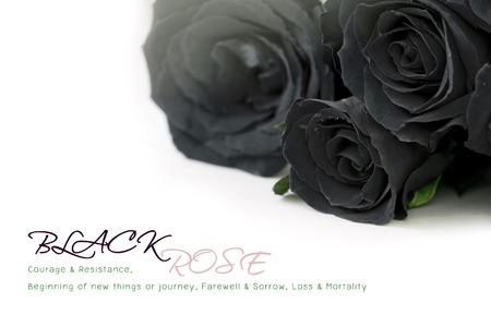 sample text: Black roses bouquet con texto de ejemplo en blanco
