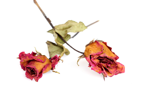 Two withered roses over white background. photo
