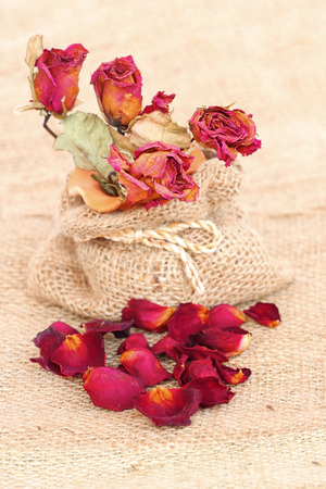 gunny bag: bouquet of dried withered roses and petals over gunny bag background. Stock Photo