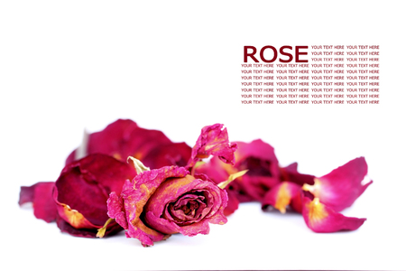 Withered roses and petals over white background, with sample text. photo