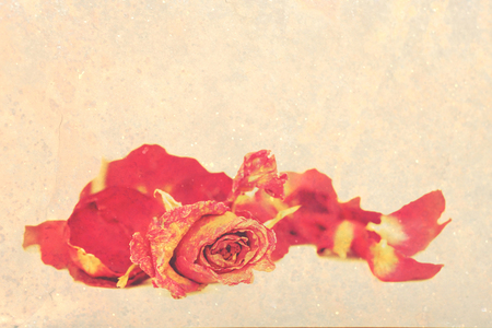 Withered roses and petals over vintage grungy background, with space for text. photo