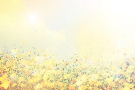 retro flowers field background Stock Photo