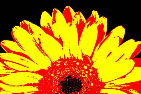 Half of orange and yellow gerbera flower, posterize style image. photo