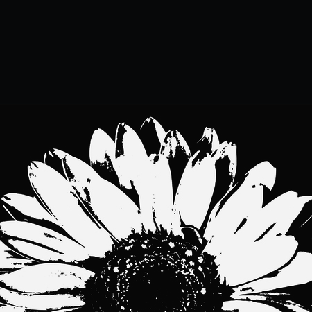 Abstract black and white gerbera flower. photo