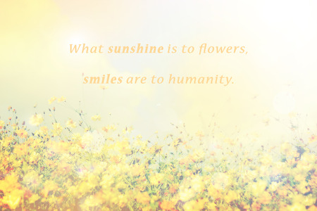 Inspirational Typographic Quote - What sunshine is to flowers, smiles are to humanity. with spring flowers field background.