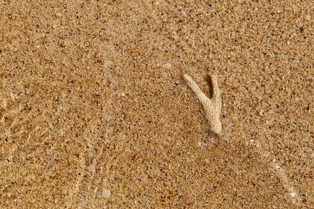 karkas: karkas koraal onderwater op gouden zandstrand voor de achtergrond.