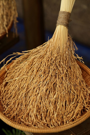 husks: Rice in the husks, paddy, unmilled rice in wicker bamboo basket, Shallow Dof.