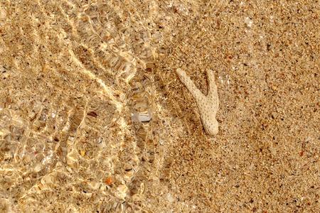 carcass: karkas koraal onderwater op gouden zandstrand voor de achtergrond.