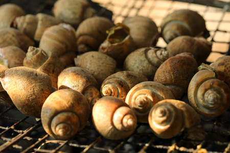 babylon: Grilled shell, spotted babylon, seafood Stock Photo