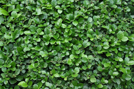 plant nature: green leaf background. Stock Photo