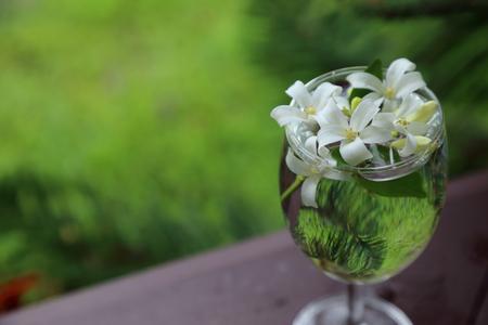 jessamine: Little white flowers, Orange Jessamine, in glass vase.