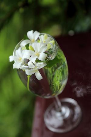 jessamine: Piccoli fiori bianchi, arancio Jessamine, in vaso di vetro.