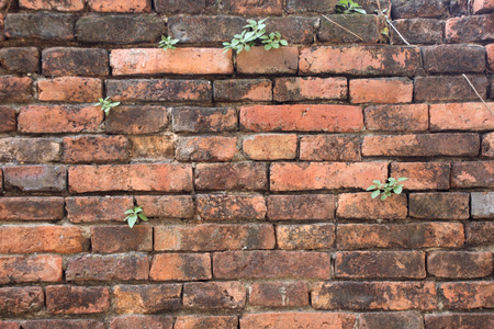suffusion: The old cracked wall of the abandoned ruins with small plant.