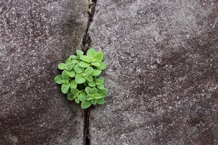fissure: Plante grandir sur la pierre fissurée.