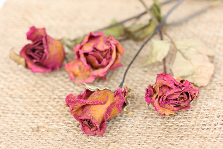 sackcloth: Whithered roses on sackcloth background.