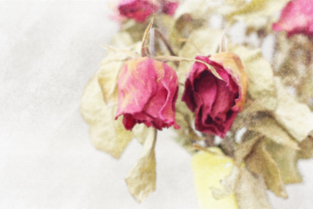 wither: Blurred image of Wither rose, died rose, watercolor vintage toned.