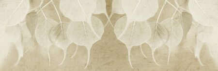 pipal: Young pipal leaves with mulberry paper texture for title bar background, sepia toned color.