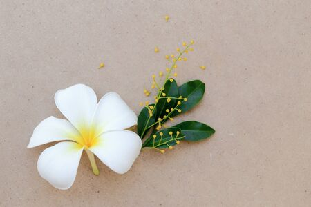 arroz chino: White Plumeria or Frangipani tropical flower and Yellow Chinese Rice flower on brown paper cardboard. Flat lay spring background. Foto de archivo