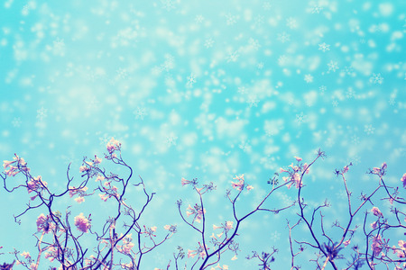 Leafless tree branch with pink flowers against blue sky and snow flakes falling for background, toned image.