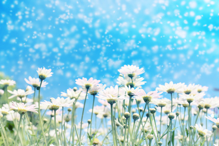 White daisy flowers in sunshine light with blue sky and snow effect for background. Stock Photo - 69531425