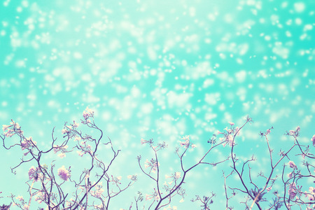 Leafless tree branch with pink flowers against blue sky and snow falling for background, vintage toned image.