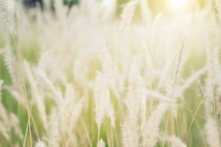Abstract background of soft and blurred grassland, vintage warm toned.