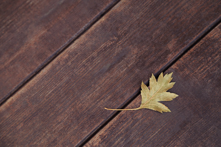 One dry autumn maple leaf on wooden background. Stock Photo - 80268826