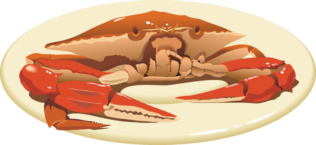 expensive food: Crab on the plate, delicious food, close up view, vector illustration Illustration