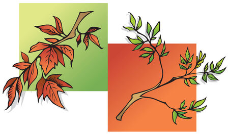 Summer and Autumn leaves, two seasons, green and red, vector illustration Stock Vector - 5601305