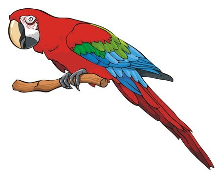 Bright colored parrot, sitting on a branch, vector illustration Illustration