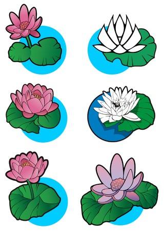 waterlilies: Lotus flower, set of 6 different lotuses, element for design, vector illustration Illustration