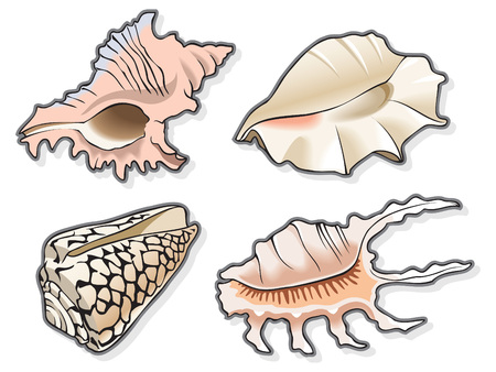 conch: Set of four seashells, using blend and gradient fill, vector illustration