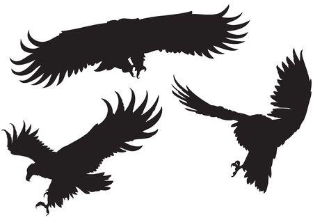 Conjunto de 3 siluetas de �guilas diferentes con grandes alas, volando, planeando, buceo Foto de archivo - 6667887