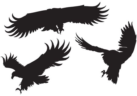 Set of 3 silhouettes of different eagles with large wings, flying, swooping, diving Vector