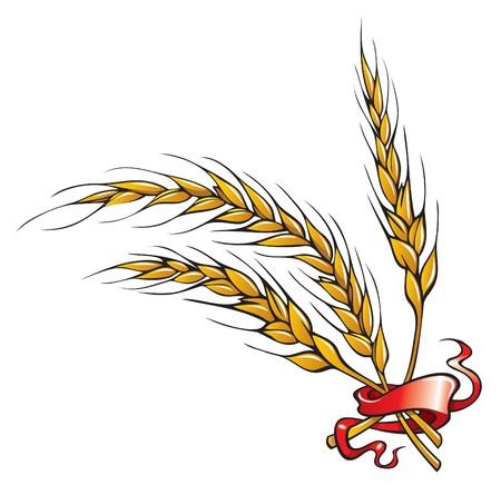 Wheat ears with ribbon,  illustration Illustration