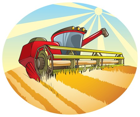 cultivating: Harvesting machine (combine) reaping wheat